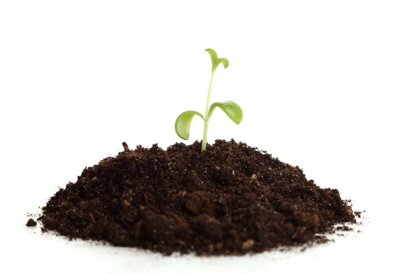 Benefícios do uso do substrato Carolina Soil