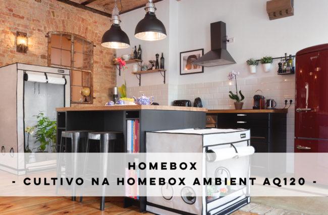 Cultivo na HomeBox Ambient AQ120