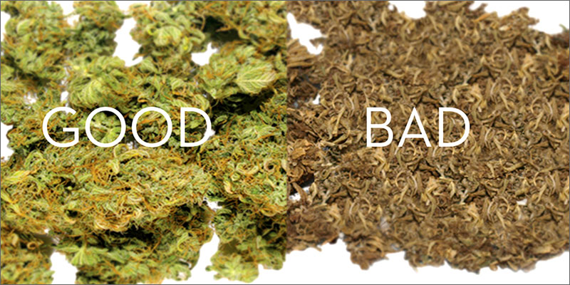 cultivo de cannabis