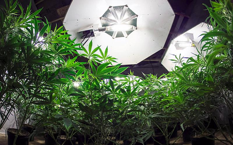 Iluminação para Cultivo Indoor