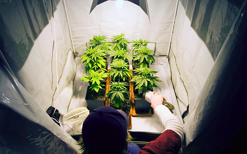 Estuda de Cultivo Indoor