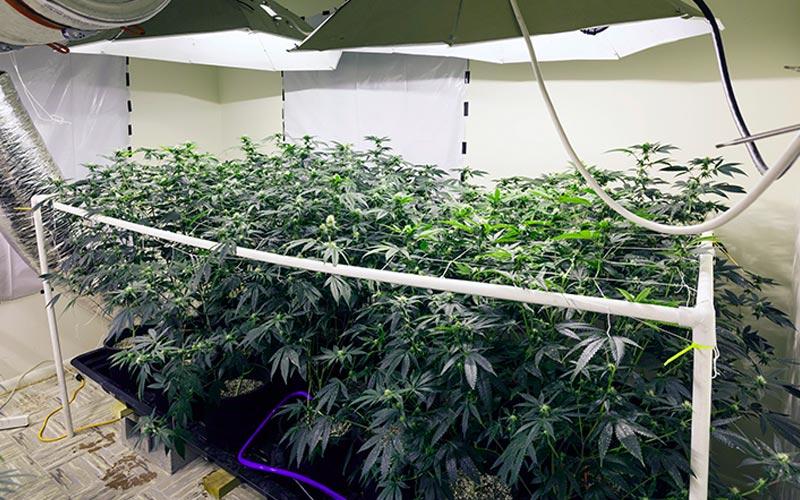 Monitoramento de Cultivo Indoor