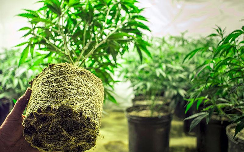 Recipientes para Cultivo Indoor