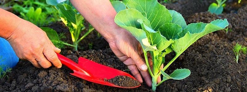 Como usar fertilizantes e substratos no cultivo
