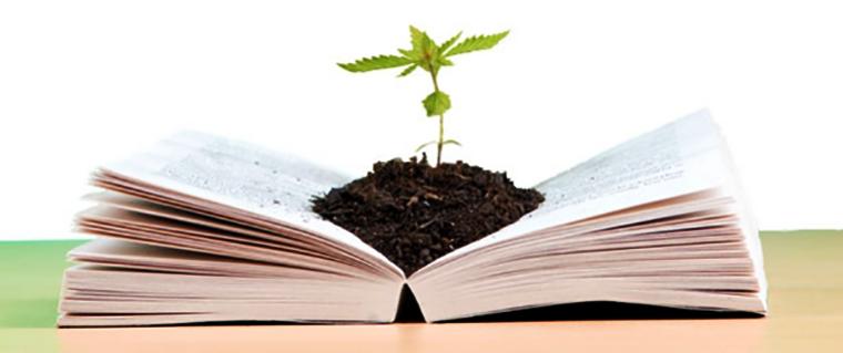 5 Livros sobre cultivo e cuidados com a cannabis