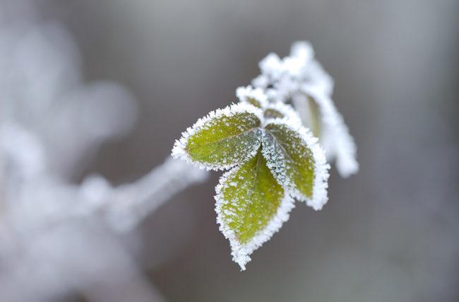Cultivo de Cannabis no Inverno