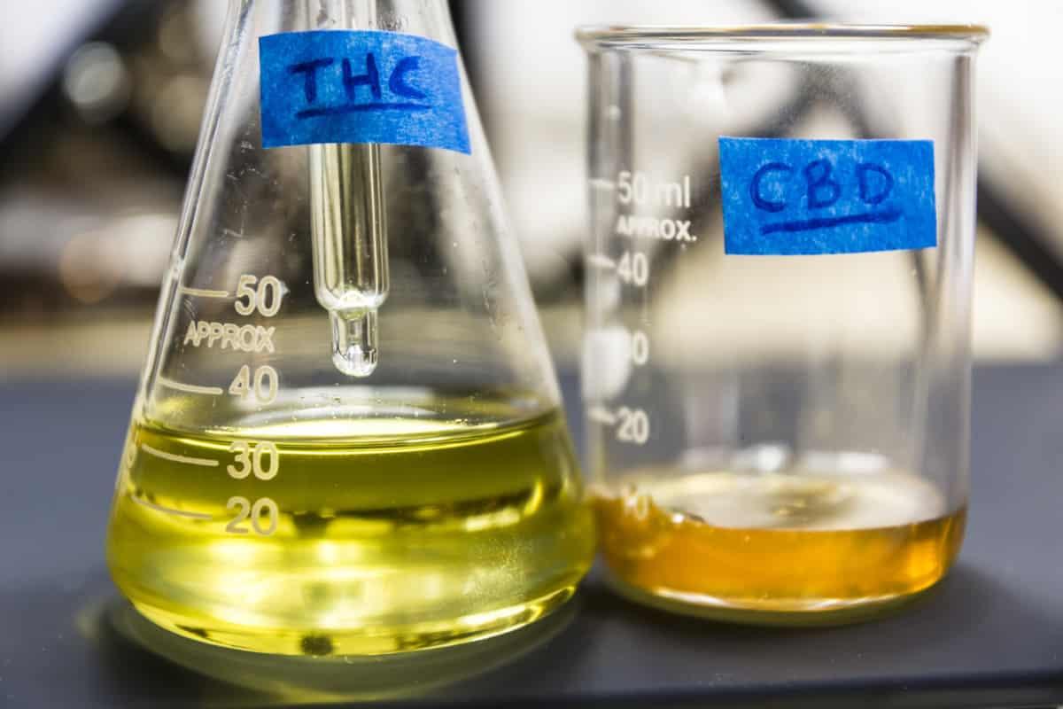 Nova técnica de extração de CBD e THC através de leveduras